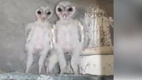 Tìm thấy hai con chim có ngoại hình xấu xí như... người ngoài hành tinh