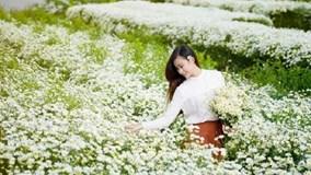 Giới trẻ thả ga 'sống ảo' trên cánh đồng hoa cúc họa mi đẹp nhất Hà Nội