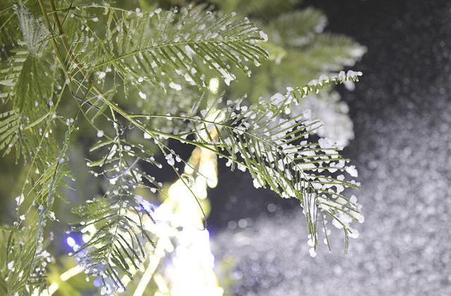 Hình ảnh bông tuyết đọng trên lá cây.