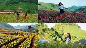 Thung lũng hoa Mộc Châu, Sơn La: Điểm đến mới của giới trẻ