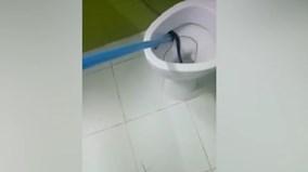 Hốt hoảng phát hiện con vật kịch độc nấp trong toilet