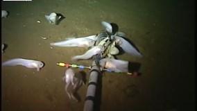 Phát hiện loài cá mới sống ở độ sâu 8.000 mét dưới đáy đại dương