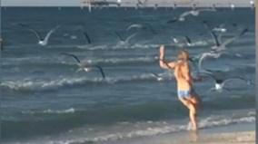 Cô gái mặc bikini trên bãi biển bị cả đàn chim tấn công