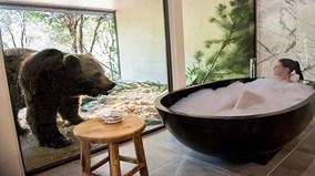 Điều thú vị ở khách sạn hoang dã đẹp nhất nước Úc