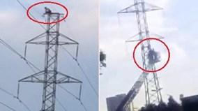 Dùng xe thang giải cứu 'ngáo đá' leo cột điện ở TP.HCM