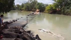 Cá sấu khổng lồ lao như tàu ngầm đến cướp cá của người câu