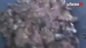 Chuột nhung nhúc ở trung tâm thành phố Paris hoa lệ