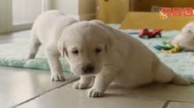 5 điều thú vị bất ngờ về loài chó