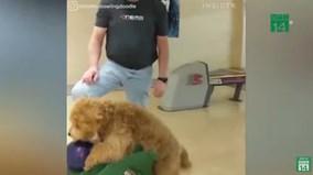 Chú chó có biệt tài chơi Bowling cực đỉnh