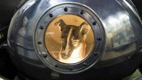 Số phận của Laika, cô chó đầu tiên bay vào vũ trụ