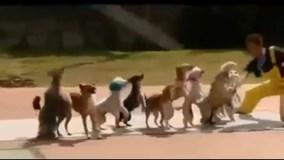 Bật cười vì những chú chó thông minh nhất hành tinh