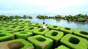 Bê tông xanh độc hút khách ở Phú Yên