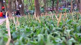 Hà Nội: Đã gỡ bỏ chông cắm ở vườn hoa khu vực hồ Giảng Võ