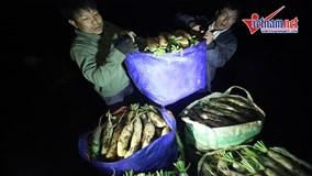 Hành trình xuyên đêm của những tấn củ cải được 'giải cứu'