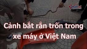 Video bắt rắn trong xe máy ở Việt Nam lên báo Tây
