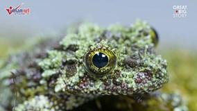 """Loài ếch """"quái dị"""" nhất hành tinh xuất hiện ở Việt Nam"""