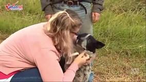 Chú chó 17 tuổi cứu sống bé gái 3 tuổi lạc trong rừng
