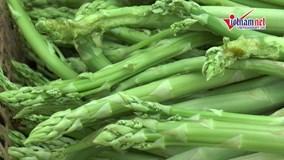 Nông dân Hà Nội trồng măng tây trong nhà lưới, thu 7 triệu một ngày