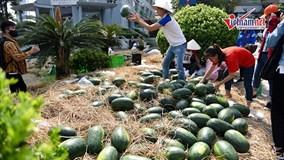 Dưa được mùa mất giá, nông dân Quảng Ngãi lại chờ được 'giải cứu'
