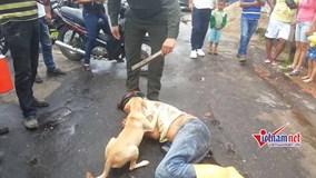 Chú chó trung thành quyết bảo vệ chủ say xỉn nằm giữa đường gây sốt