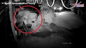 Thanh niên đánh cả ô tô đi trộm 2 cây hồng trong đêm