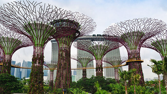 Tìm hiểu quy trình ''nói hộ cho cây'' ở Singapore
