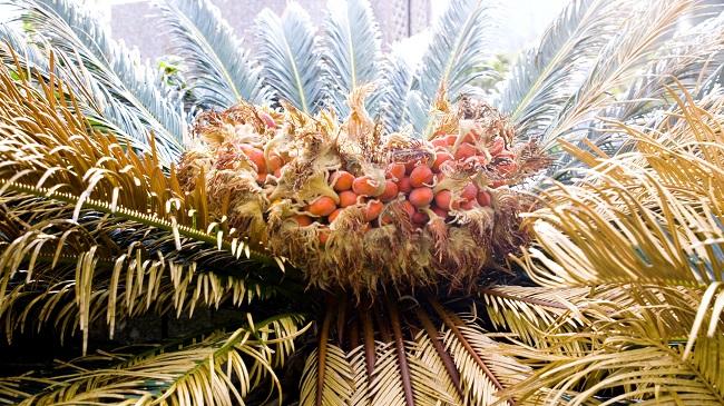Hòn đảo kỳ lạ chuyên ăn cây độc tại Nhật Bản