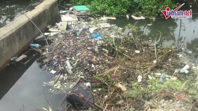 Đà Nẵng: Nước thải chưa qua xử lý gây ô nhiễm nghiêm trọng