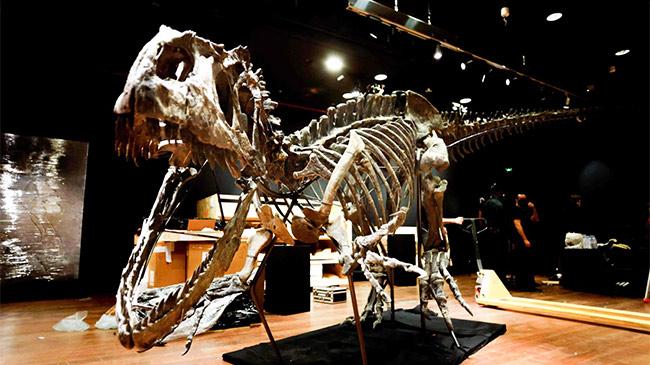 Ngắm bộ xương khủng long bạo chúa 150 triệu năm tuổi,...