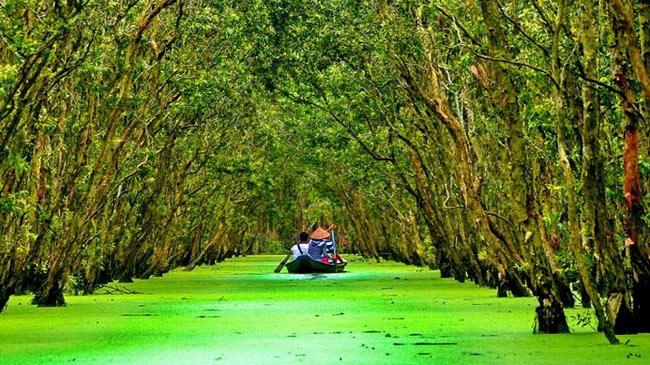 Du ngoạn vẻ đẹp của tự nhiêntại khu rừng ngập mặn - An Giang
