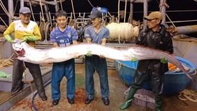 Ngư dân bắt được cá hố khổng lồ nặng gần 1 tạ, 4 người nâng mới xuể
