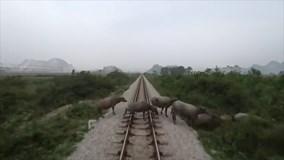 Khoảnh khắc tàu hỏa tông chết đàn trâu thả rông đi qua đường ray