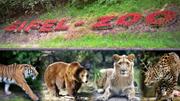 Nhiều thú dữ xổng chuồng ở Đức, 1 con bị bắn hạ
