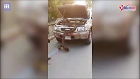 Tài xế kinh hãi phát hiện trăn khổng lồ trong mui xe