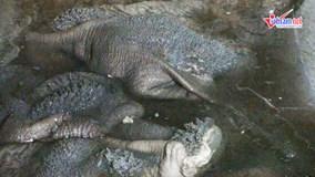 Nội tạng bò ngâm trong nước đen sì, chế biến trên sàn dơ bẩn