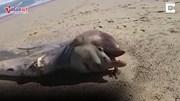 Bí ẩn xác quái vật khổng lồ trôi dạt vào bờ biển