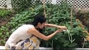Ca sĩ Thủy Tiên giản dị bất ngờ khi hái rau trong vườn nhà