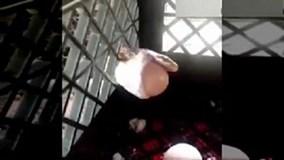 Mò vào chuồng gà, rắn bị kẹt đầu vào lưới sắt vì... quả trứng