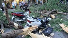 Hà Nội: Cây đổ đè 5 người trên phố Quán Sứ, 2 người bị thương nặng