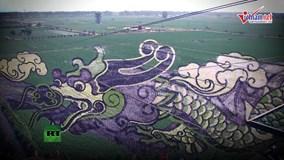 Những bức tranh 3D tuyệt đẹp được vẽ trên đồng lúa