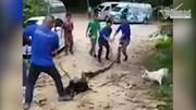 Dân làng hiệp lực cứu chó bị trăn siết chặt