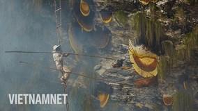 Bộ tộc cổ xưa 'thách thức tử thần' lấy mật ong trên đỉnh thế giới
