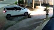 Cẩu tặc đi ô tô bắt trộm chó nhanh như chớp