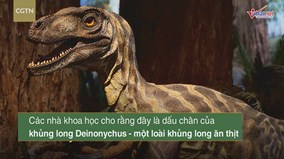 Tận mắt nhìn dấu chân khủng long ăn thịt sống cách đây 120 triệu năm