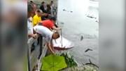 Cá nhảy tanh tách khỏi hồ nước, dân đua nhau mang ô ra hứng