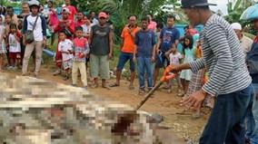 1 người bị tấn công, cả làng giết gần 300 con cá sấu để trả thù