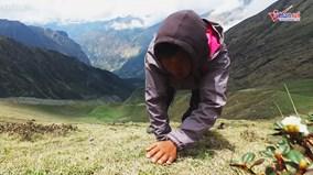 Hành trình đánh đổi mạng sống đi tìm 'viagra' tự nhiên của người Nepal