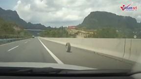 Xe đang chạy rơi bánh, lốp xe lăn lông lốc gần 2km trên cao tốc