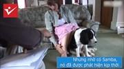 Chú chó biết phát hiện bệnh ung thư, cứu sống chủ nhân một cách thần kỳ