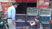 Chim phóng sinh khắp các miền 'bay' về Hà Nội dịp Rằm tháng Bảy
